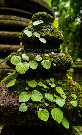 moss and some weed are growing on the very old pagoda in rainforest.