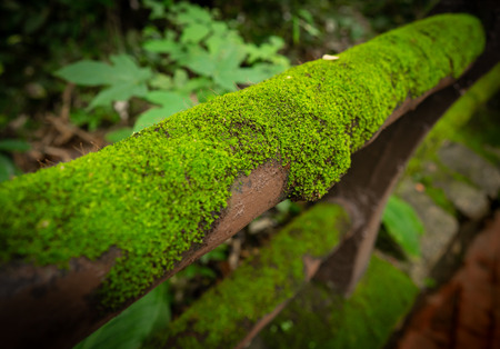a lot of green moss grow on the cement fence