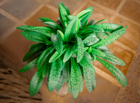 one kind of Thai herb that growing in cold weather