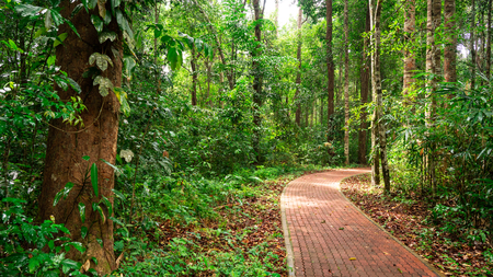 a long footpath in the jungle people can walk through and go arround. Stok Fotoğraf