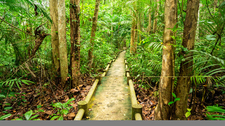 the very long walkway  have built in the jungle. Stok Fotoğraf