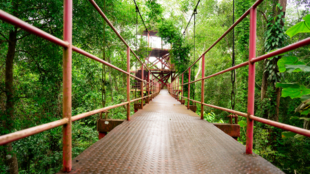 the red iron bridge hanged on top of high tree in the rainforest Stok Fotoğraf