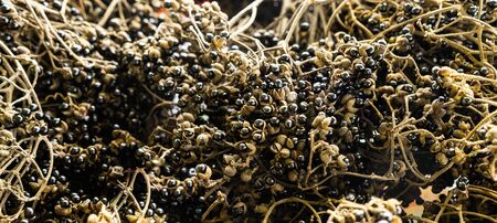 dry black seed called makhaen used to be an ingredient of Thai curry.