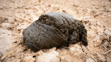 buffalo dung on the dry land