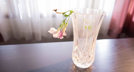 a beautiful small flower in the old glass vase.
