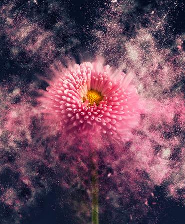 disintegrating: Flower - exploding Stock Photo