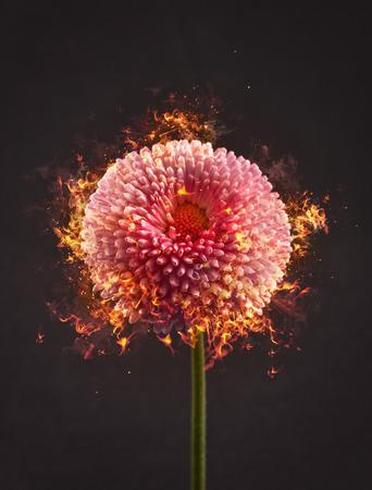fire flower: Flower on Fire