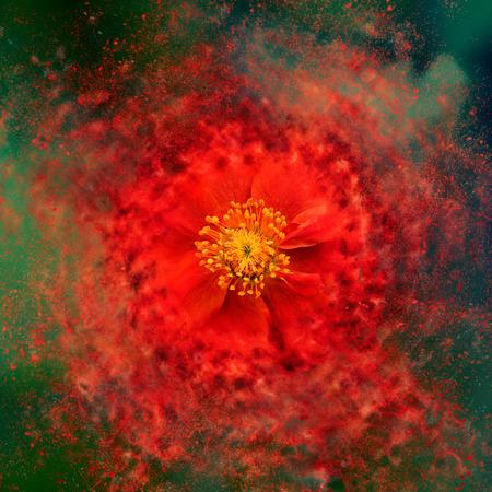 flowerpower: Flower - Exploding