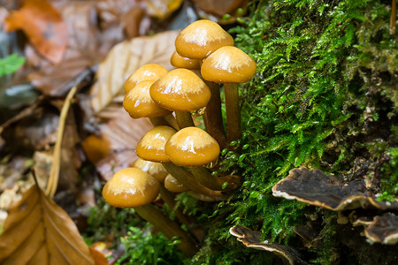 Fungus on Tree stump Stock Photo