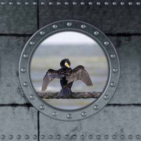 Looking through a ship Porthole on the ocean. Cormoran on a rope.