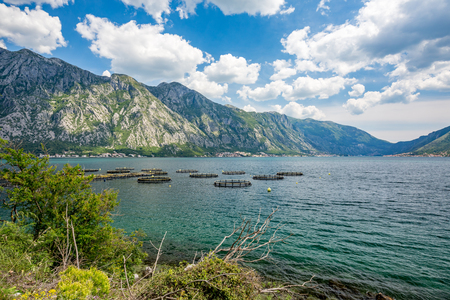 Spring daytime landscape of the fish ponds at the Kotor bay, Boka Kotorska, near the town of Perast, Montenegro
