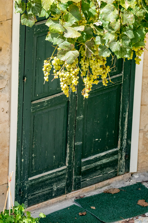Vintage old green wooden house door with plastic mats in front and light green vine plant with dangling grape clusters, sunny summer August day in Matera, Basilicata region, Italy Stock Photo