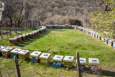 Bee-garden set in rectangle outdoors in a sunny early spring day. Wooden colorful hive boxes. Bulgaria, Pazardzhik region. Apiculture is popular Bulgarian handicraft Banque d'images - 120443280