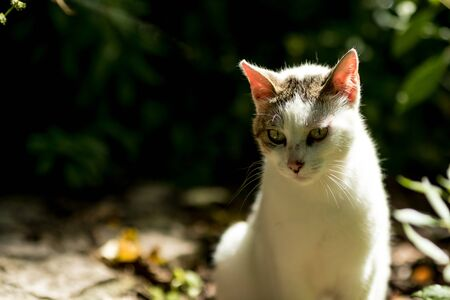 White stray cat looking down low key nature half-body portrait with blurred dark green forest background Stock fotó