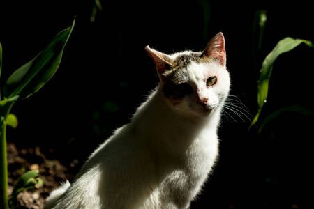 White stray cat looking straight low key nature half-body portrait with blurred dark green forest background Stock fotó