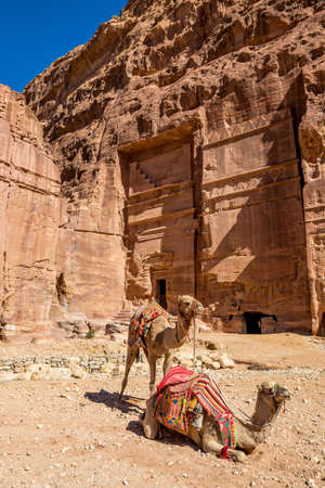 Two camels waiting at the Camel Riding Point at the scenery Street of Facades under the beautiful sunny day at Petra ancient religious complex and tourist attraction, Hashemite Kingdom of Jordan 版權商用圖片