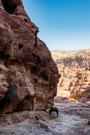 Horse resting under cliff could be seen when walking the scenery Monastery Route created for hundreds of years. Petra complex tourist attraction, Hashemite Kingdom of Jordan