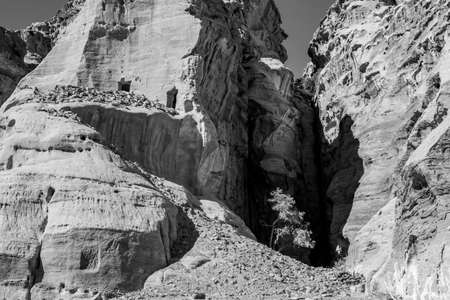 Lonely tree growing between cliffs near the scenery Street of Facades with tombs and temples created hundreds of years. Petra complex tourist attraction, Hashemite Kingdom of Jordan. Black and white