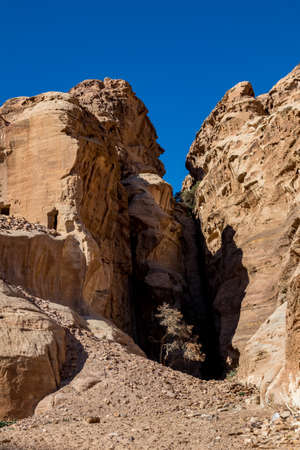 Lonely tree growing between cliffs near the scenery Street of Facades with tombs and temples created hundreds of years. Petra complex tourist attraction, Hashemite Kingdom of Jordan. Vertical frame