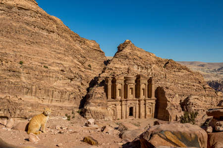 Sun-lit view of stunning Ad-Deir in ancient city of Petra, Jordan and blurred ginger cat in foreground. Ad-Deir or The Monastery. Petra complex and tourist attraction, Hashemite Kingdom of Jordan