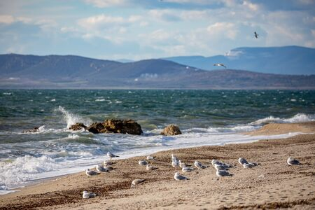 Selective shallow focus on a flock of seagulls resting on the beach and looking towards the sea. Late autumn scenery day near the village of Fanari, region of Xanthi, Northern Greece