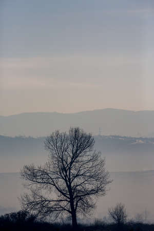 Hazy day afternoon vertical landscape with lonely leafless tree, travel photography at the Rose Valley, Central Bulgaria. Slopes of Sredna Gora mountain in background, pastel colors 版權商用圖片
