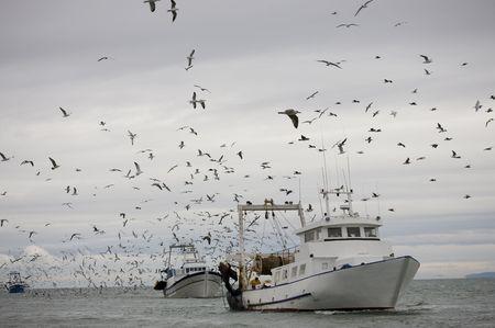 pesquero: arrastrero rodeado de gaviotas en virtud de cielo cubierto Foto de archivo