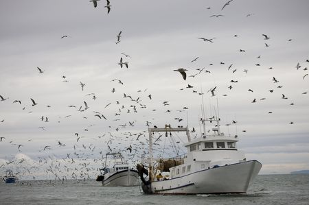 commercial fisheries: trawler surrounded by seagulls under covered sky Stock Photo