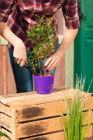 young gardener in checkered shirt cultivated plant in pot Stock Photo
