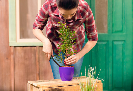gardener in checkered shirt cultivated plant in pot on porch Stock Photo
