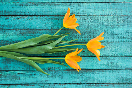 top view of yellow tulips bouquet on turquoise wooden tabletop Stock Photo
