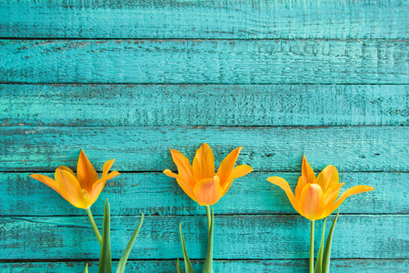 top view of yellow tulips in row on turquoise wooden tabletop