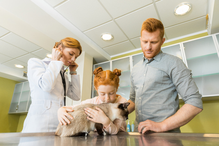 Man and his daughter at veterinary doctor with their pet- checking cat