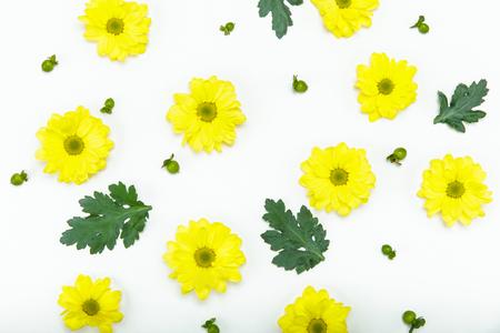 화이트 절연 아름 다운 피 작은 노란색 꽃의 상위 뷰 스톡 콘텐츠