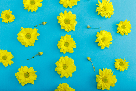 Top view of beautiful yellow blooming flowers with buds isolated on blue