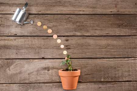 top view of coins pouring from watering can into plant, saving concept