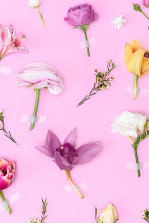 Top view of beautiful blooming flowers and buds isolated on pink
