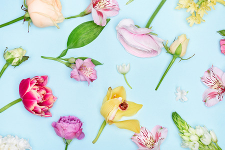 Top view of beautiful blooming flowers collection isolated on blue
