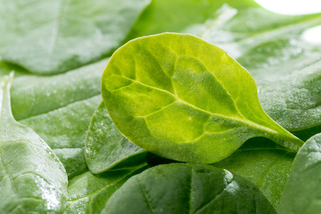 fresh green spinach leaves, healthy eating concept Stock Photo