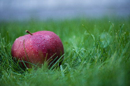 fresh picked red apple with water drops