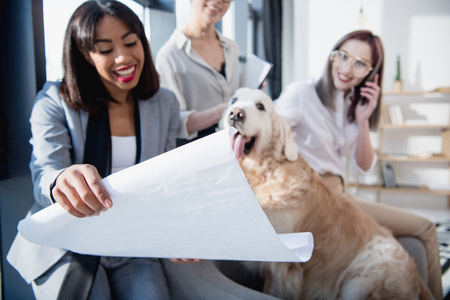 multiethnic businesswomen in formal wear showing blueprint to dog at office 版權商用圖片