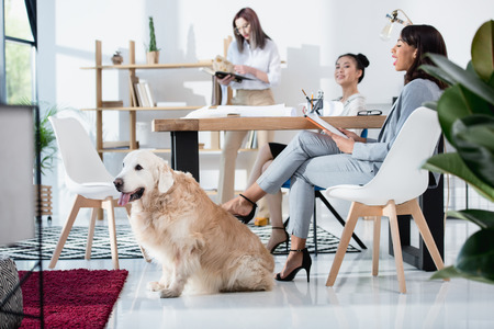 multiethnic women in formal wear working at office with dog Banco de Imagens