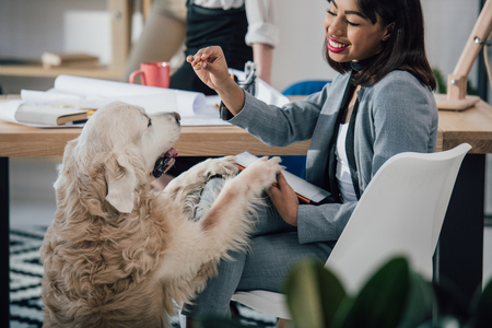 young african american businesswoman playing with golden retriever dog in office