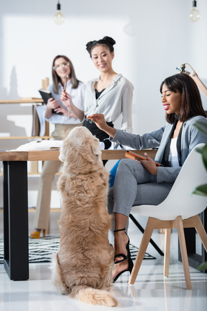 multiethnic women in formal wear working at office with dog Stok Fotoğraf