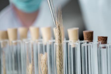 化学研究室の試薬と小麦の耳管をテストします。