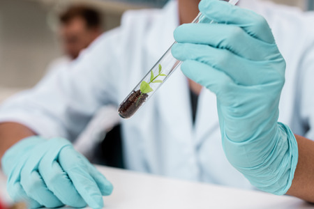 scientist in protective gloves holding test tube with green plant in soil Stock Photo