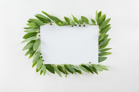 신선한 녹색 잎 빈 카드 화이트 격리