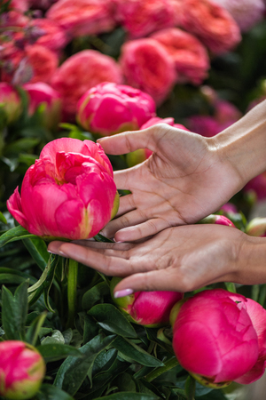 female hands with beautiful peony flowers