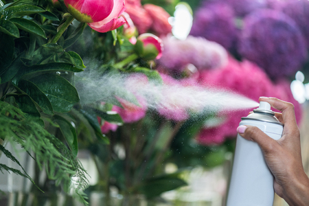 florist spraying beautiful flowers in flower shop