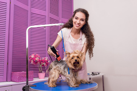 young groomer trimming yorkshire terrier dog with trimmer and smiling at camera